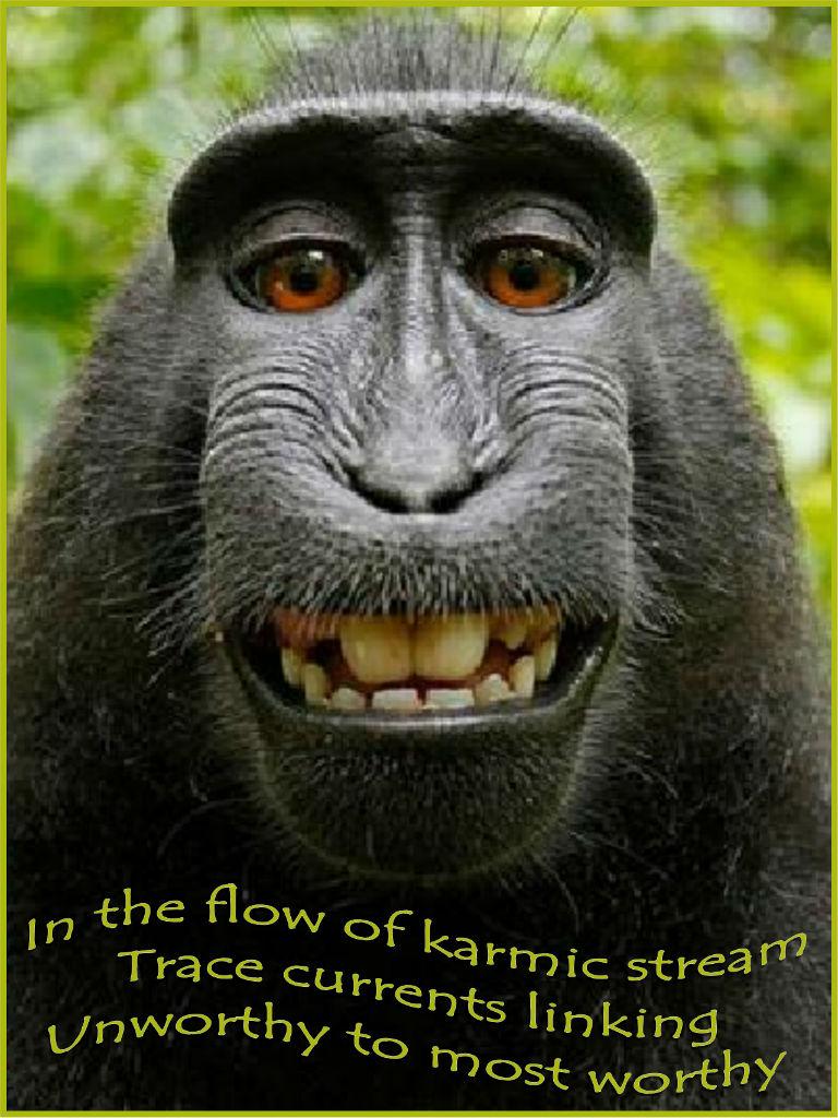 gorilla grin - karmic link 768x1024