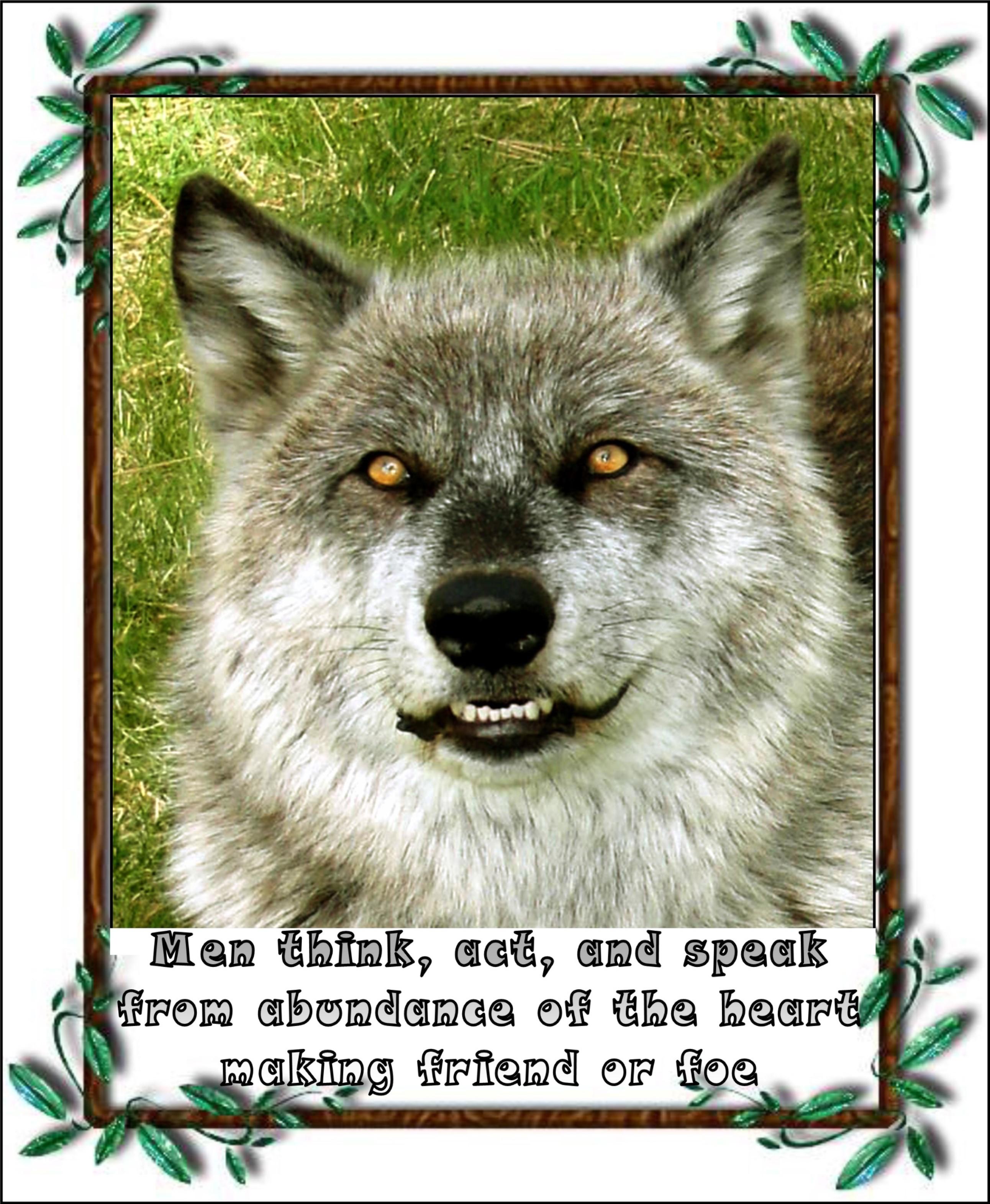 wolf   300 dpi  2014  lrg